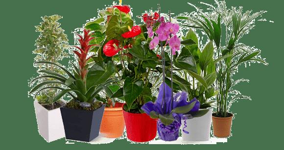 plantas de temporada en vivero