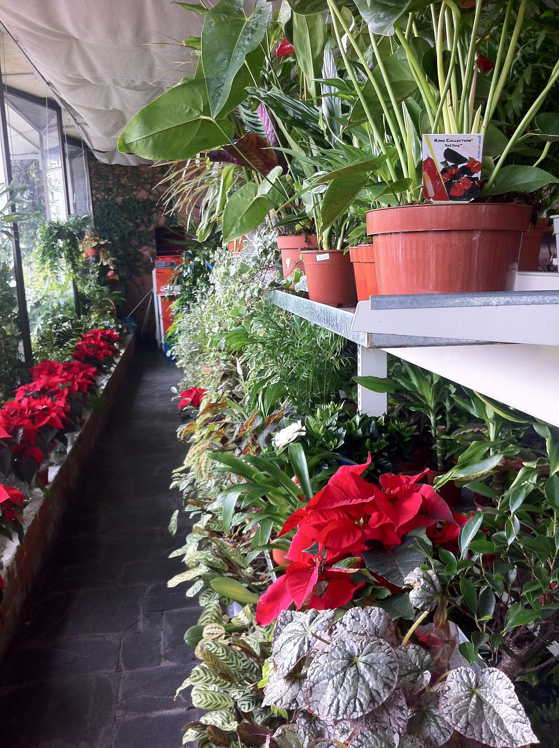 Viveros en madrid centro empresa de jardineria venta de - Vivero madrid centro ...